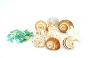 decor shells seaglass